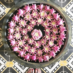 Stunning Lotus Flower art
