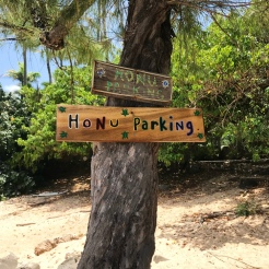 """Honu"" means sea turtle in Hawaiian"