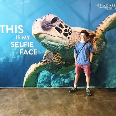 This boy LOVES sea turtles